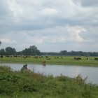 Place Where the Cows Cross the River